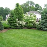 Design of Backyard Privacy Landscaping Ideas 1000 Images About Evergreen Privacy...